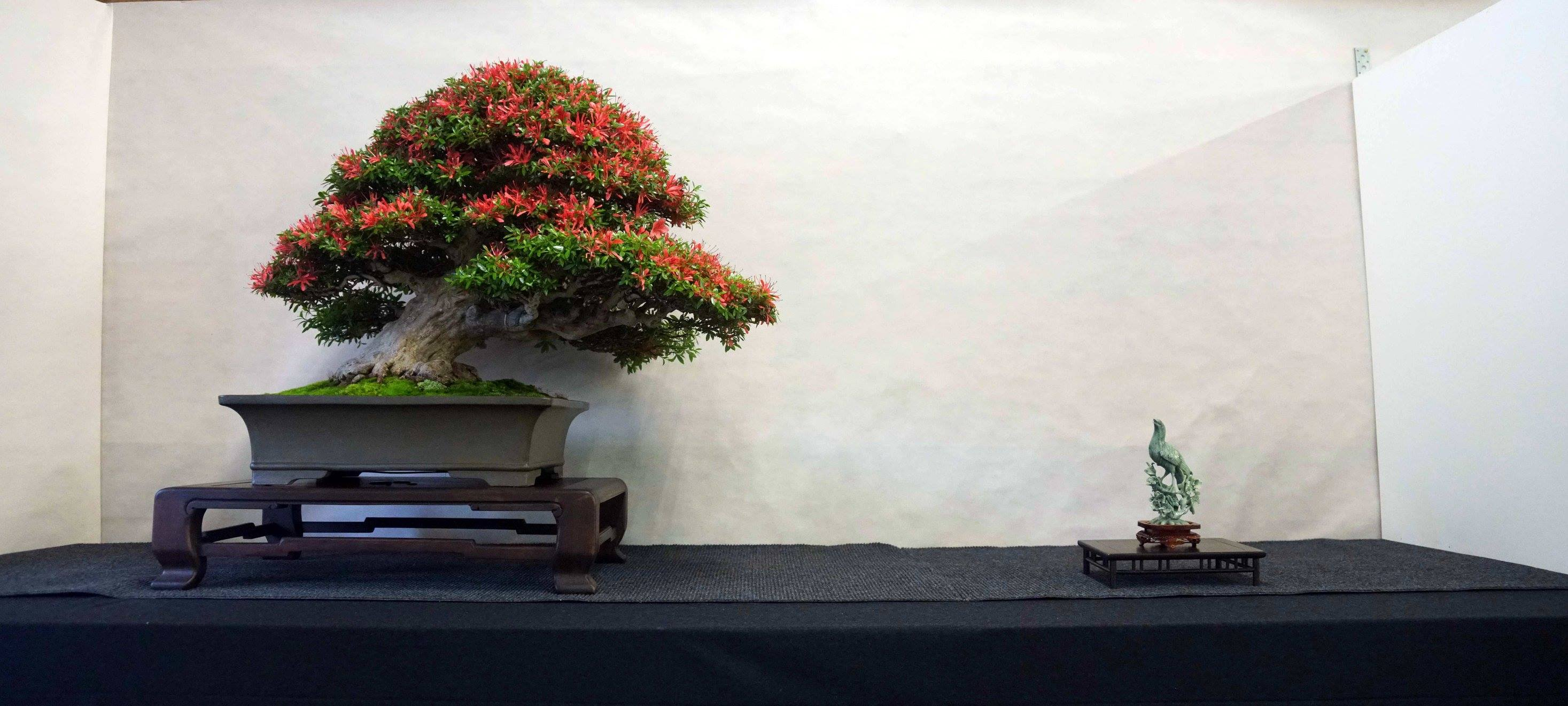 As expected, the bonsai and Kusamono festival in Hallein was a great pleasure. ...