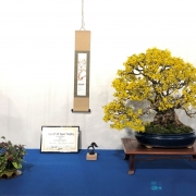 The second tree of a customer, which I am also very pleased about, a Forsythia i...