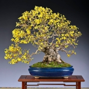 This year, The BONSAI ART AWARD went to Frank Jesse from Germany for his bloomin...