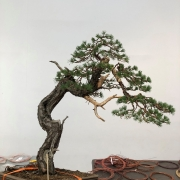 Demo tree Of the first day at the Tantai exhibition in Vitoria. Thanks to Sam ...
